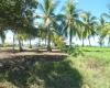Playa Coyote, Guanacaste, ,Terreno,Venta,1381